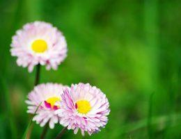 Rimedi naturali contro stress e stanchezza