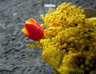 festa-donna-mimose