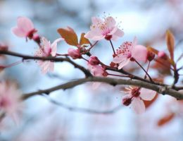 purificazioni di primavera