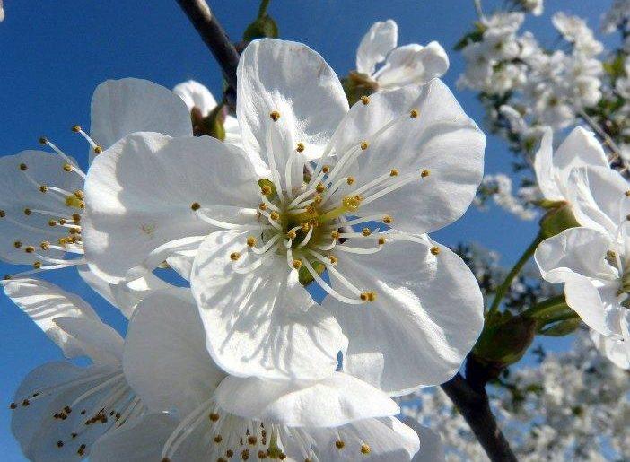 fiori di bach 01