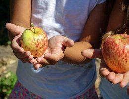 frutta nelle scuole 01