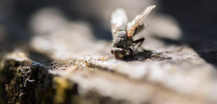 mosche in casa come difendersi