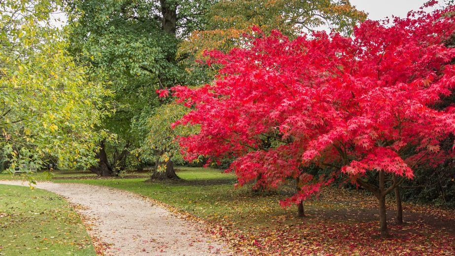 autunno cambridge