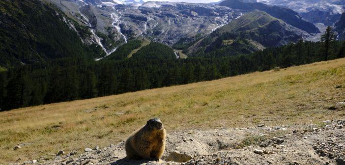 Saas-Fee: consigli per una vacanza in famiglia nella Perla delle Alpi